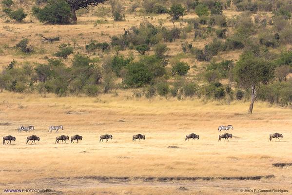 Scenes of Masai Mara (7/7)