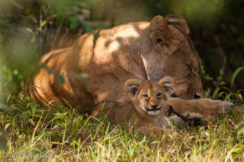Grinning cub