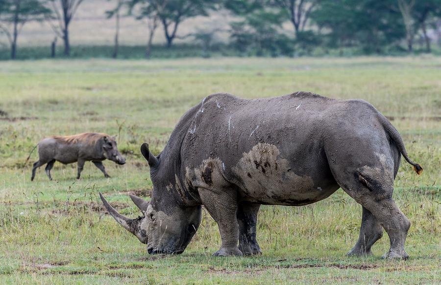 Жопа кения фото фото 670-634