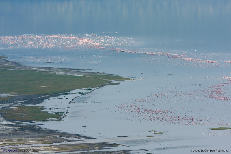 Myriads of flamingos at Lake Nakuru. Photograph taken from a high hill. You can say they are so many, but there were more not so time ago.
