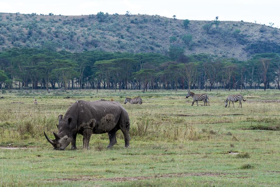 Жопа кения фото фото 670-596