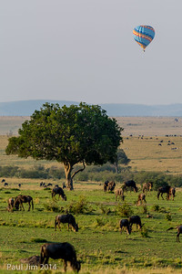 Wildebeest and Hot Air Ballon, Connochaetes taurinus