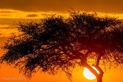 Sunrise at Maasai Mara