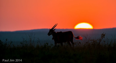 Sunrise at Maasai Mara with Eland