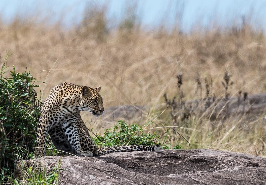 Жопа кения фото фото 670-874