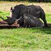 RhinoFamily1