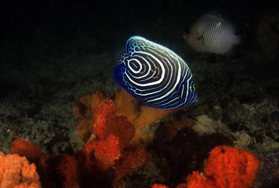 Diving in Kenya