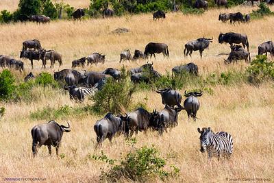 Scenes of Masai Mara (2/7)