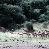 Lake Bogoria National Reserve in Kenya