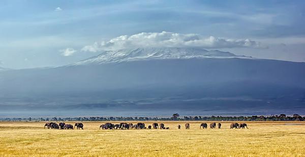 39 elephants and Mt. Kilimanjaro