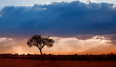 brief rain cloud at sunset in Masai Mara