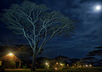 Ndutu Safari Lodge.  No boundary from wildlife, so exercise extreme caution.