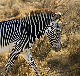 Safari 0363