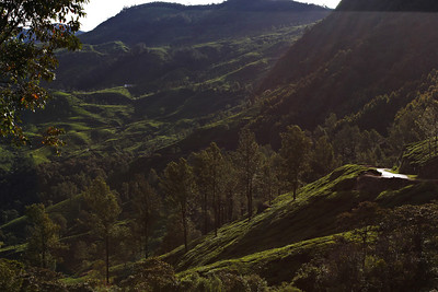 A way I can't forget  Munnar, Kerala