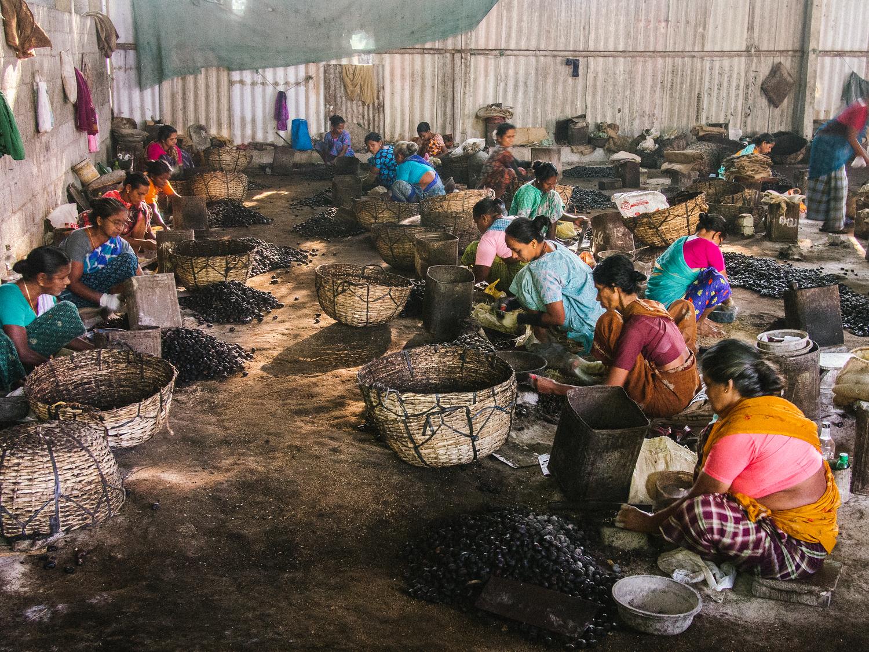 Women working at a cashew factory in Kerala India