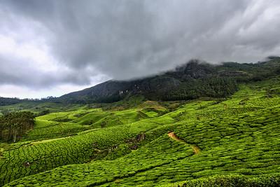 Tea Plantations- Munnar