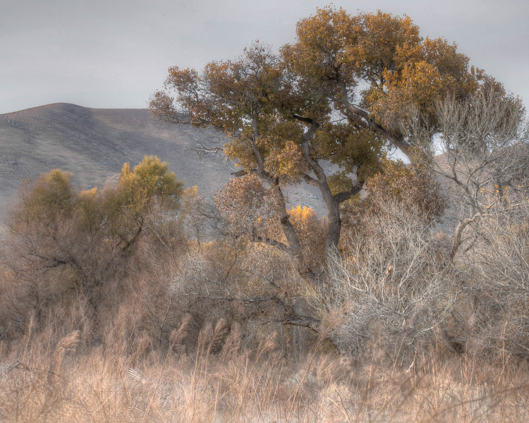 Cottonwood - Kern River Preserve