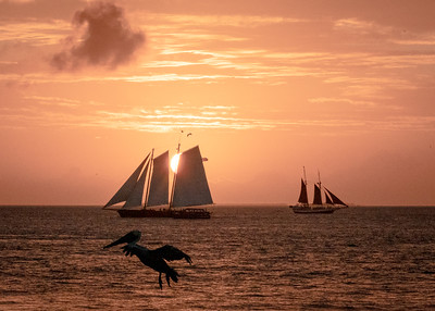 Sailing-Into the Sun-with Pelican-Sunset-