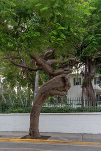 Interesting shape and texture of the tree trunk