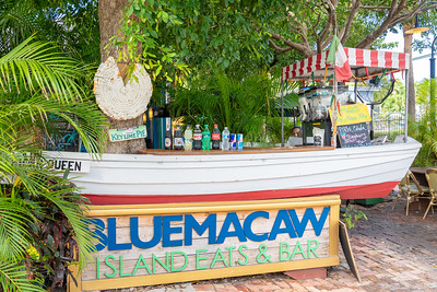 Blue Macaw1-702537