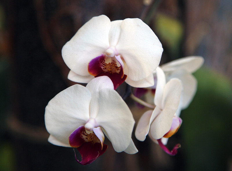We reach the Hotel.  Orchids are growing in the Hotel courtyard