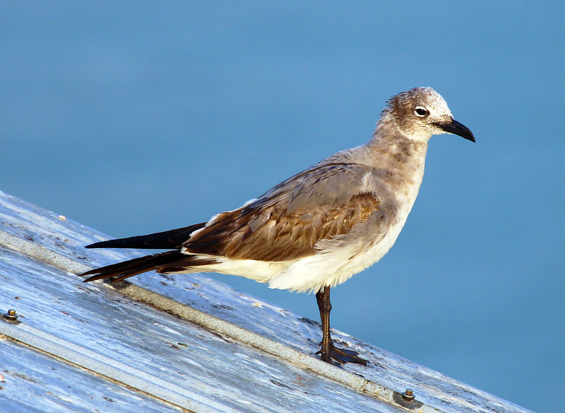 A gull on the shed next to the ferry watches us leave