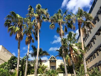 Poolside Palms at La Concha