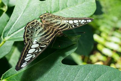 Key West Butterfly Conservatory 2013-06