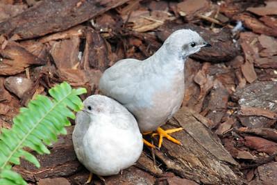 Bulbous Birds