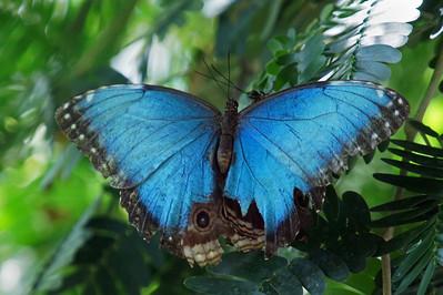Butterfly 14 & 15
