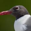 "Gull  <a href=""http://www.wklein.smugmug.com"">http://www.wklein.smugmug.com</a>"