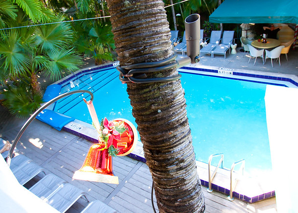 View of the pool from our balcony.  Pam trees and Christmas Bells.