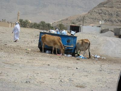 Local wildlife in Al Darah just over the UAE border