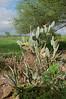 D1 Kia Lodge cactus
