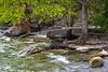 Trees and rocks along the Lake Ontario shoreline/ 2019 September 3.