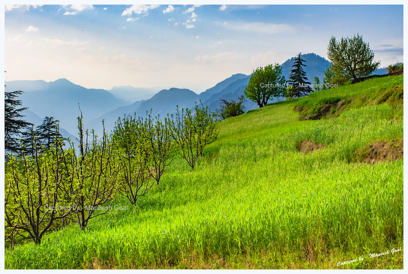 Lush green fields and orchards dazzling in the evening sun. Hike to Chehni.