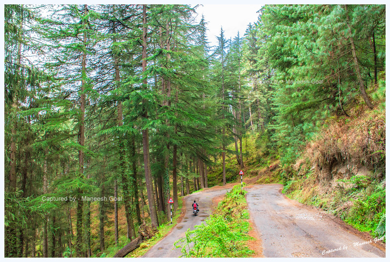 Lovely winding roads with hairpin bends. Driving back towards Jibhi. Bahu - Gada Gushaini road.