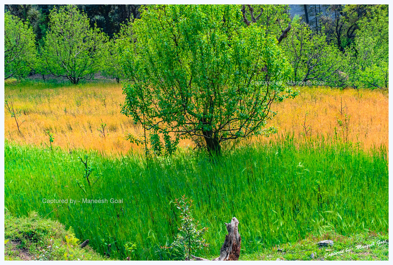 Colourful field we spotted on our hike to Chehni Kothi