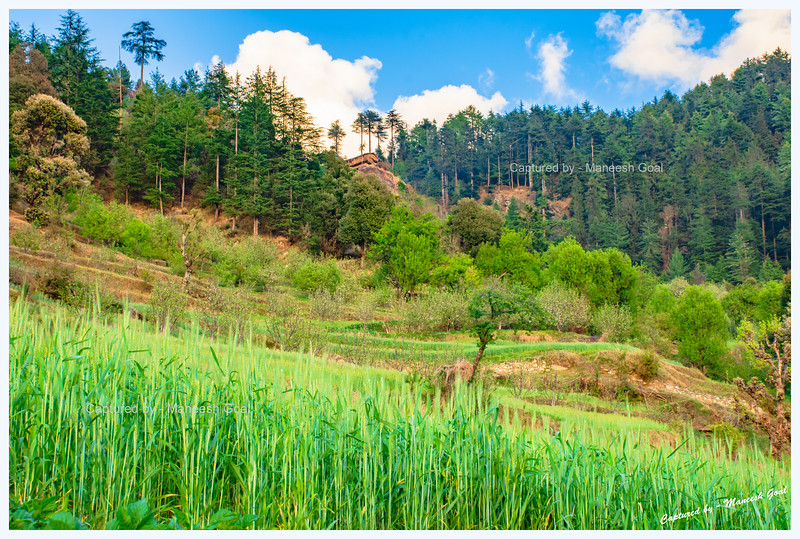 Lush green fields and forest around Chehni
