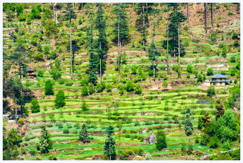 Waves of green ribbons. Sights around Jibhi.