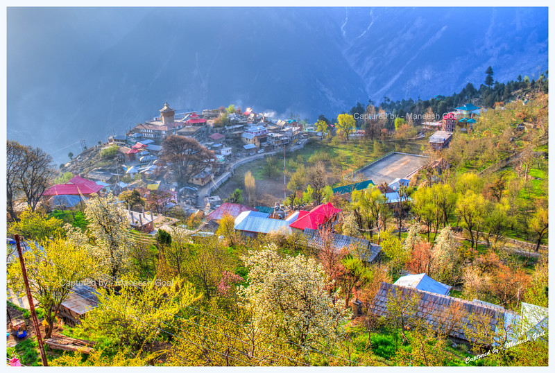 Riot of colours. Being springtime, Kalpa looked resplendent in the golden light at sunrise.