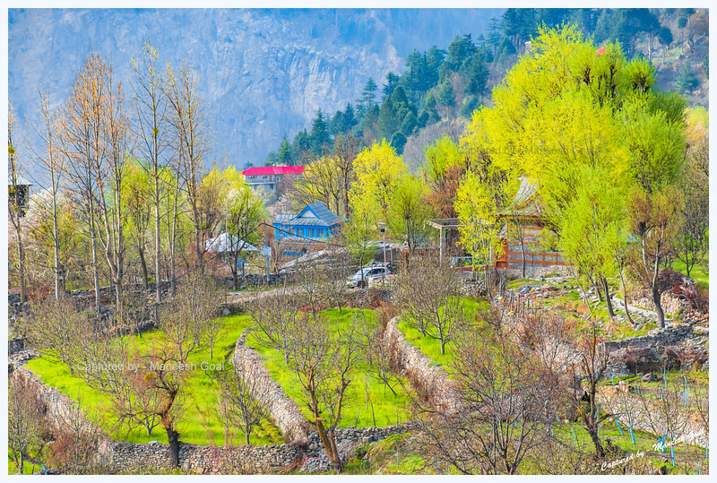 Beautiful blue-house with orchards around it. Kalpa.