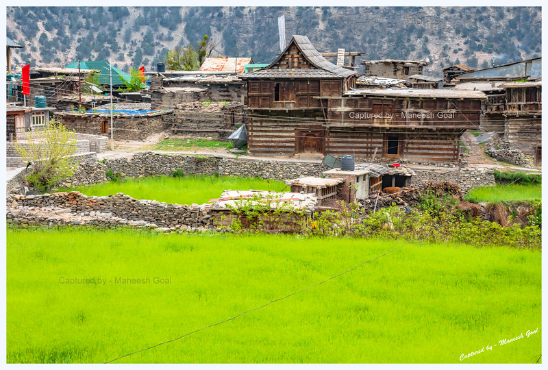 Old style Himachali houses. Lush green fields. Pangi - Reckong Peo Road.