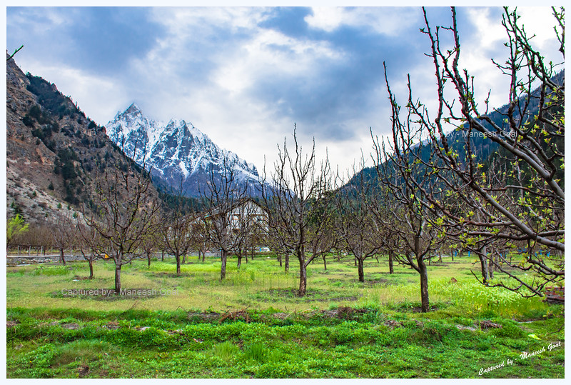 Orchards in Batseri