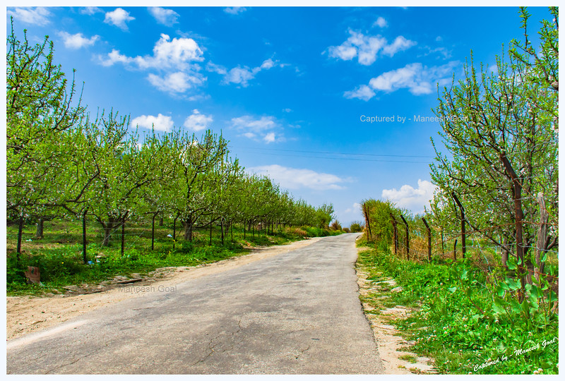 Rampur - Mashnoo - Sarahan Road lined with apple orchards on either side.