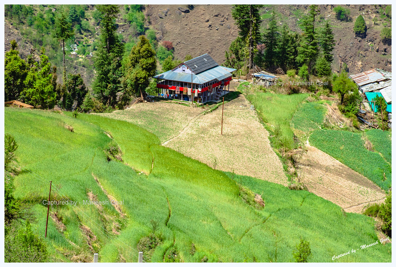 Lush green fields and traditional Himachali house near Shangarh, Sainj Valley.