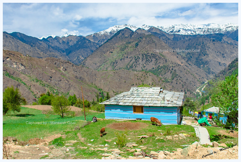 Pretty blue house near Shangarh, Sainj Valley.