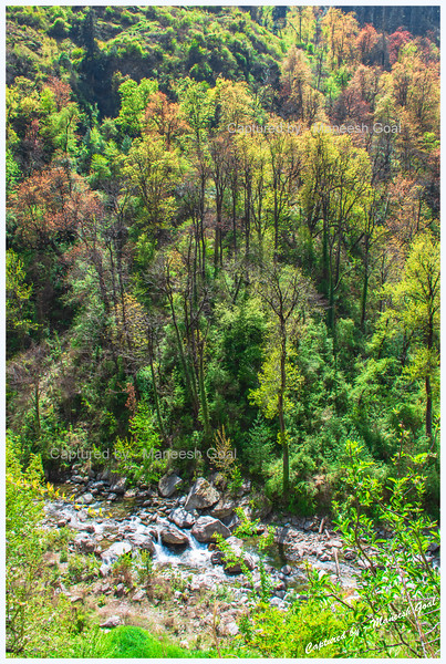 Colourful trees and Tirthan River near Batahad (Bathad)