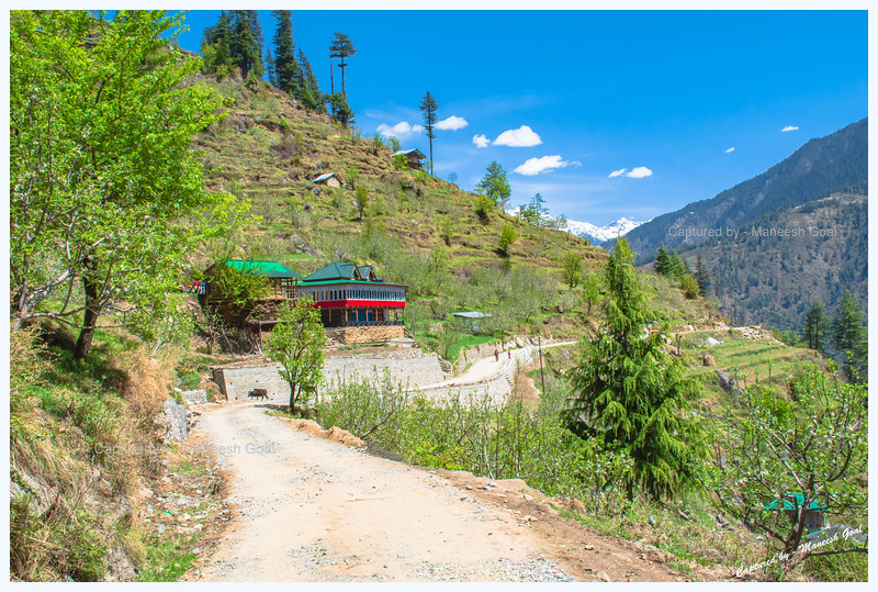Traditional Himachali houses, nestled amongst fields and apple orchards, on Sharchi Road