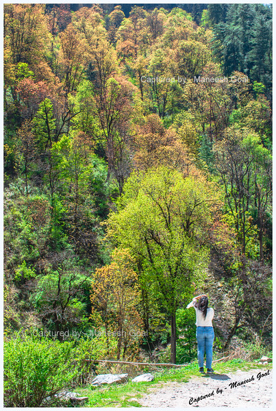 Photographing the colourful trees near Batahad (Bathad)